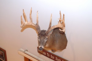 shed antlers from King Buck
