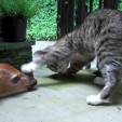 Kitten with Deer