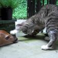 Kitten with Deer