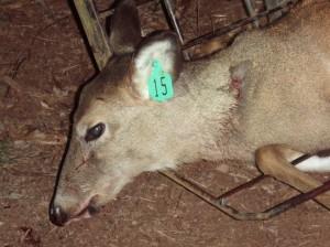 Lancaster deer