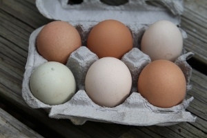 Local_Chicken_Eggs (300x200)