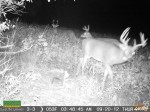 Bucks like these will move quickly when food is depleted...a lesson I learned the  hard way this year.