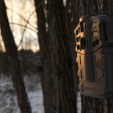 When deer season ends, don't despair. Get into the woods to scout and use your game cameras for surveying does and bucks to see what survived the season.