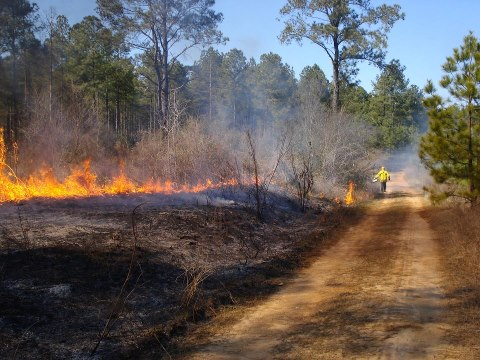 A prescribed burn can help your land and generate new vegetation along with rejuvenating the soil.