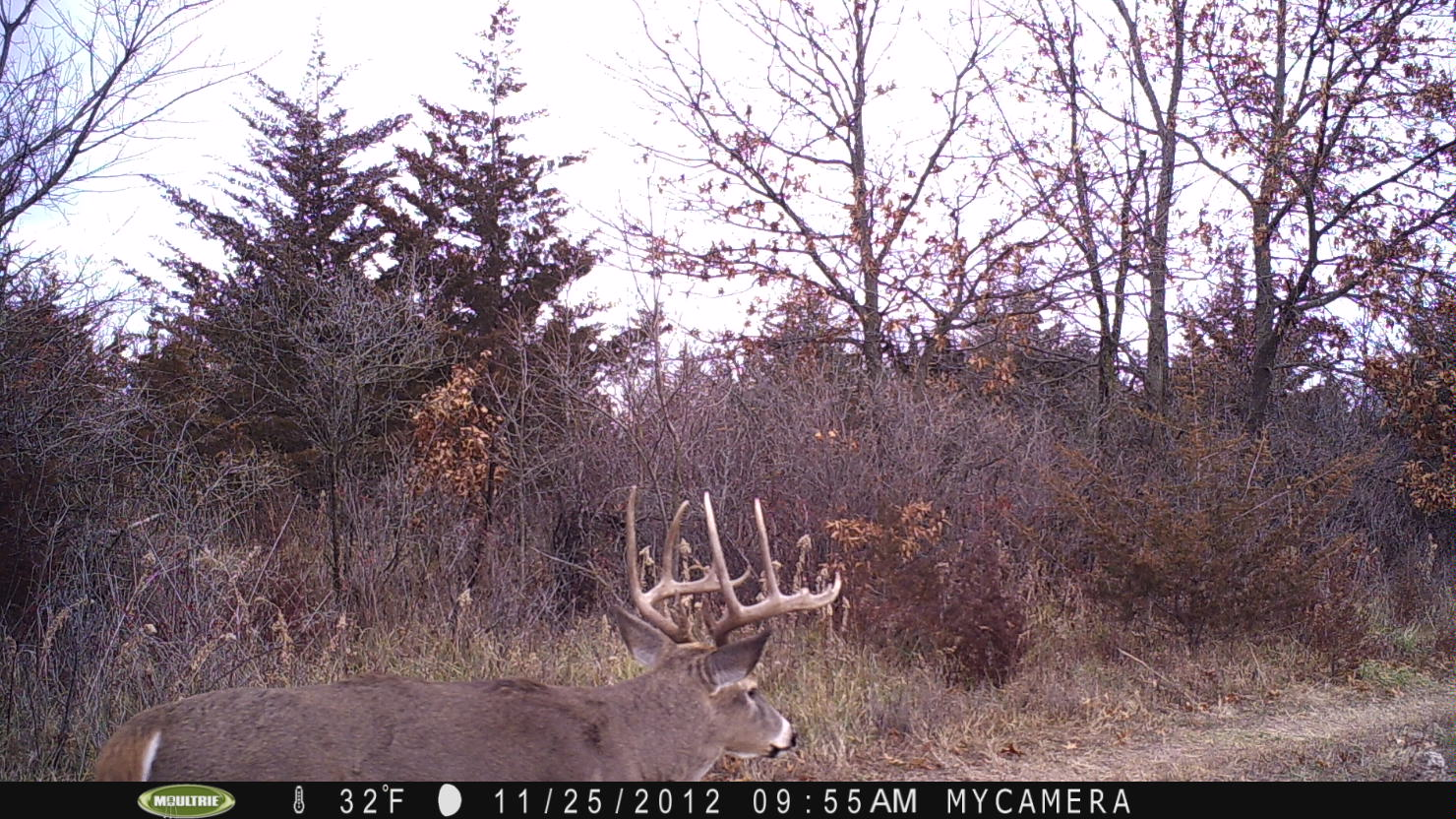 One of our target, late season bucks