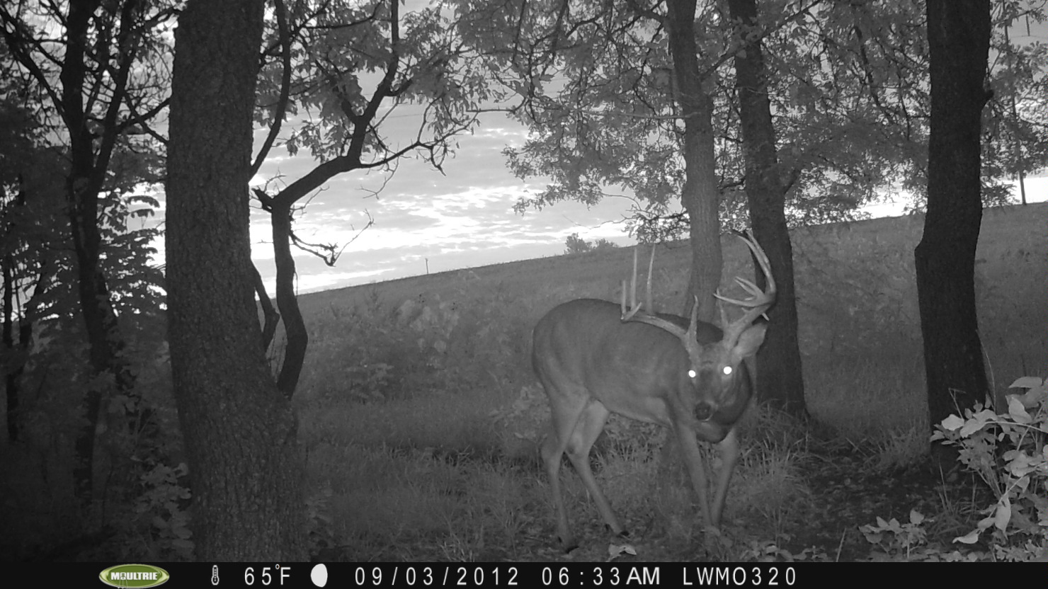 Trail cam picture