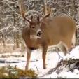 Pat Reeve giant Saskatchewan buck