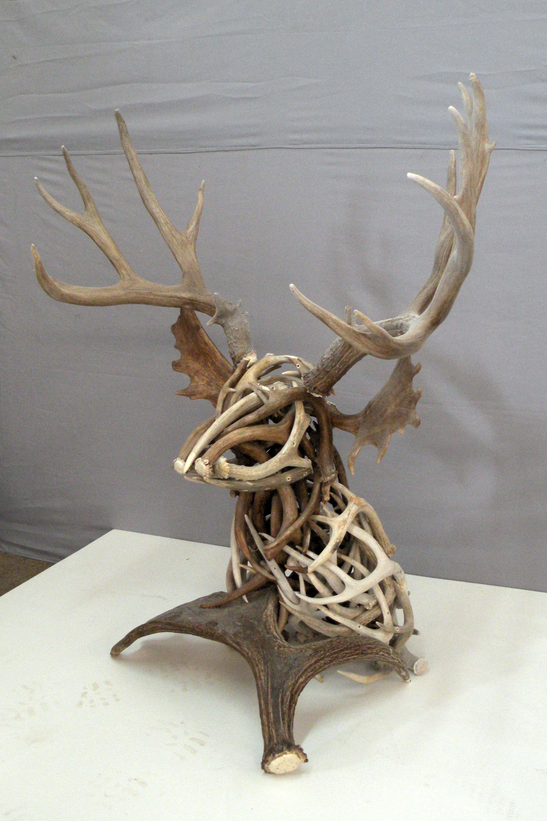 Head Turning Antlers