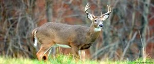 Pennsylvania hunters are being asked to help with a new deer-forest research study.