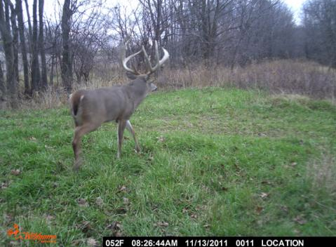 Jason Sanders killed this buck killed this Illinois buck during the state's shotgun season in 2011. It is believed to be the largest 8-pointer ever killed in North America. This trail camera photo just surfaced on the Internet this week.