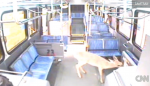 Deer on Bus