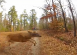 bike vs deer
