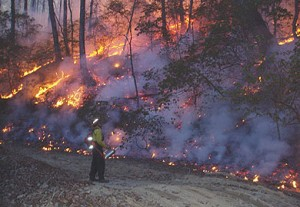 Prescribed burning is one great way to eliminate understory growth and leaf litter, and rejuvenate the soil.