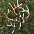 Now is the time in most states to look for and find shed antlers, which is a great way to get an idea of where bucks are hanging out so you can plan for next season. (Photo: Darrell Nieschwitz)