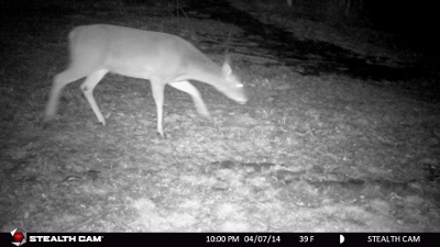 Kristen_Schmitt_Steath_Cam_Doe