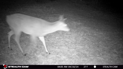 Kristen Schmitt Steath Cam Doe