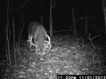 Big Buck Working Mock Scrape