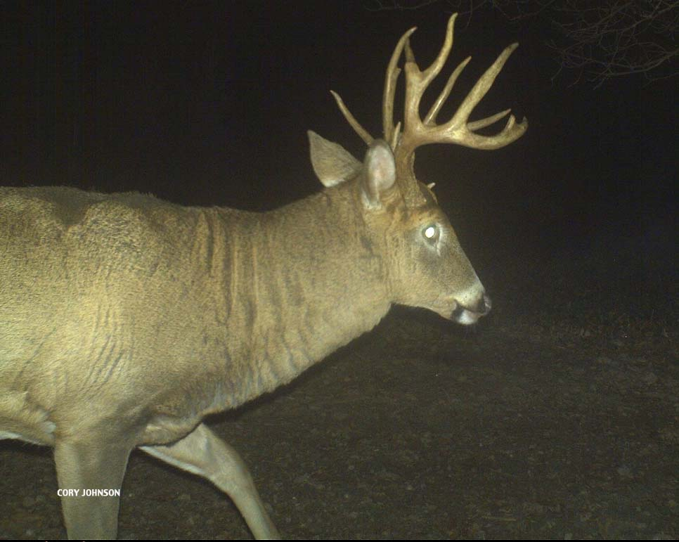 Trail Camera Photo of Big Buck
