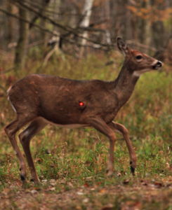 Lighted Nocks for bowhunting