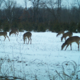 Waupaca County, Wisconsin, is home to more than 60,000 whitetails. (photo by Dan Schmidt)