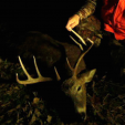 Maryland deer poaching law