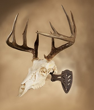 Display your European mounts in style with the SkullHooker bracket.