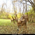 This buck in north-central Wisconsin was caught on camera checking a scrape doctored with Smokey's Preorbital Gland Lure. Bucks will check rubs and scrapes — their signposts — throughout the season.