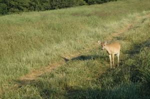 James Kroll deer