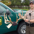 Poaching is a problem throughout the United States. Ohio DNR wildlife officer John Zientek in Huron County displays antlers from a poaching case. Boone and Crockett Club is working with several states in a new program called Poach and Pay that helps set fines for poaching.