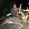 Axis deer are found in some parts of Texas and provide great hunting opportunities.