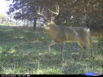 Now is a great time to start your post-season camera surveys and keep up with bucks that maybe survived the season.