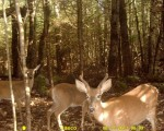 Trail Camera Photos From Northeast