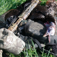 A home turf Eastern gobbler cemented the Grand Slam!