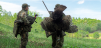 Lifelike Turkey Decoys Make Gobblers Take Second Look