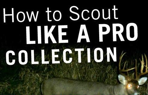 Scout Like a Pro