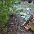 Weed Deer