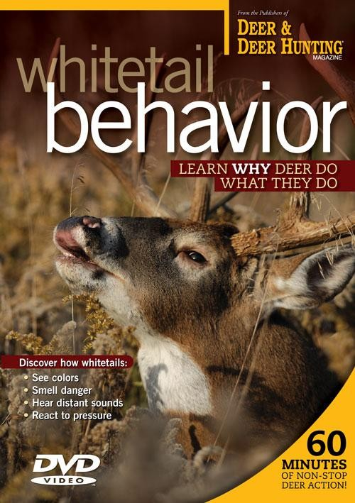 Whitetail Behavior