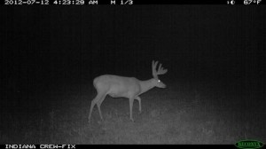 A trail camera photo of Nightmare, an Indiana buck killed illegally last October.