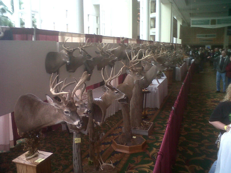Big Deer on Display