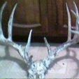 Antlers from deer said to be owned by Kansas collector in 2008.