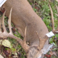 Buck that Marc Anthony said he killed in Illinois in 2010.