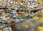 chronic_wasting_disease_info_ci_2