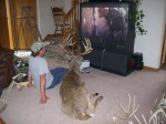 deer watching tv