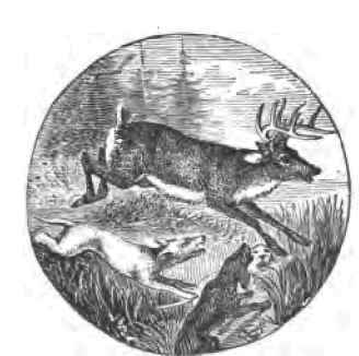 Dog-Deer Hunting