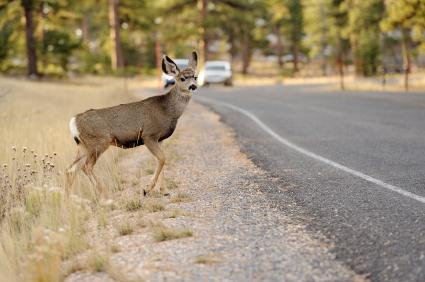 deercar