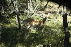The early season in Wyoming means lots of deer sightings. Lots and lots of deer sightings!