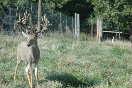 Deer breeders throughout the country will keep an eye on a lawsuit in Texas against the state's wildlife agency about who owns deer.