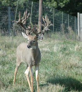 Enclosures often pit landowners and hunters against state wildlife officials and others in a never-ending debate.