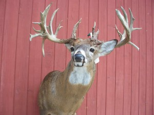 This record book non-typical was killed illegally in Illinois.