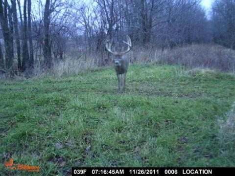 Illinois record buck